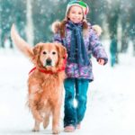 A Guide to Golden Retriever Exercise